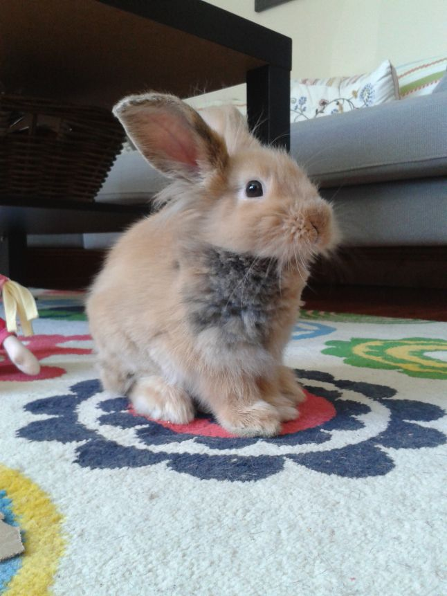 Hello From Freddie Pretty Animals Cute Bunny Rabbit