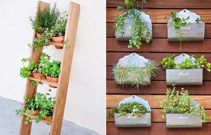 Pin di Grazia Toma su fiori e piante | Piante, Fiori