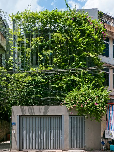 Climbing plants grow across a steel trellis that fronts this renovated house in Hanoi.