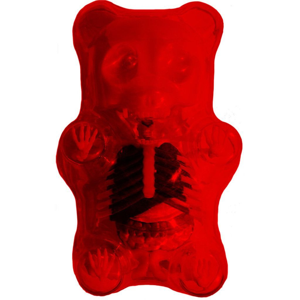 4D Master Red Gummi Bear Skeleton Anatomy Model | Pinterest ...