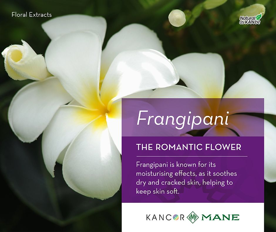A Guide To Know More About Floral Extracts Frangipani Nothing Evokes A Tropical Feeling Like Frangipani They Are Univer Frangipani Plumeria Floral Fragrance
