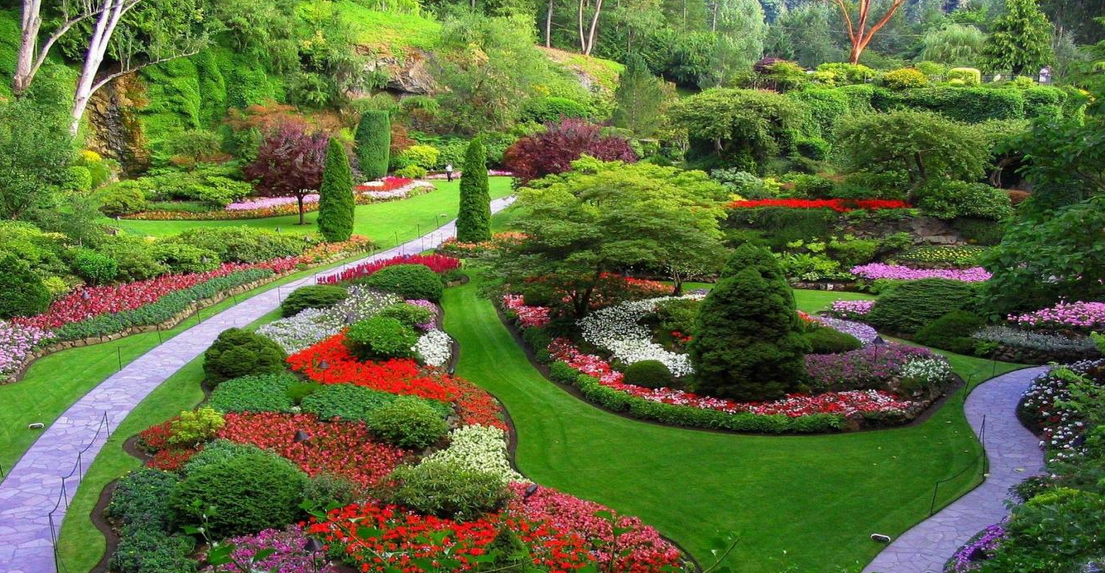 Landschaftsgärtner  Landschaftsgärtner eine Blume Runde Form und die Farbe grün ...