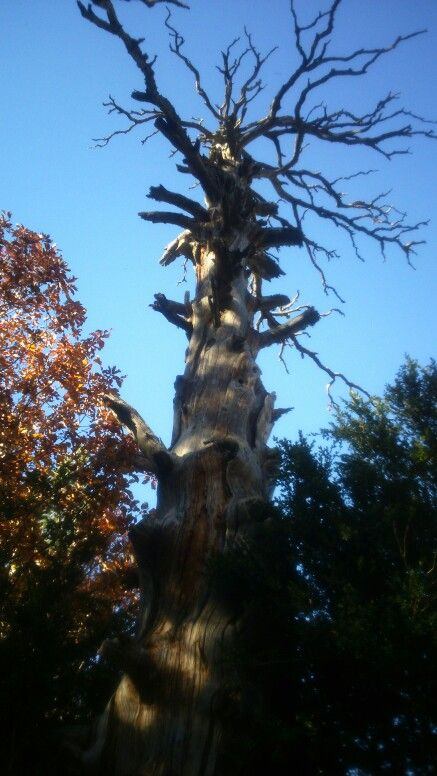 Escultura arbórea