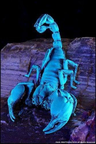 Scorpion, Creepy Spider, Scorpio