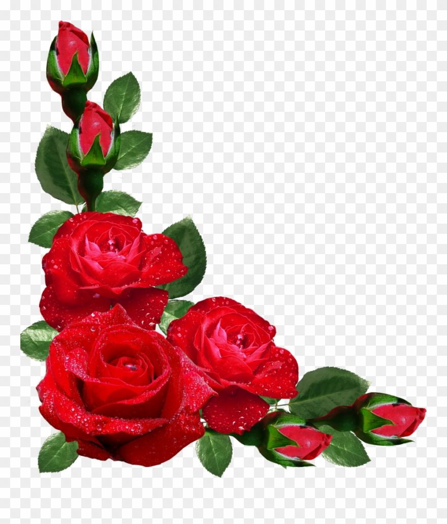 Red Rose Flower Border Design Flowers Bunga Mawar Merah