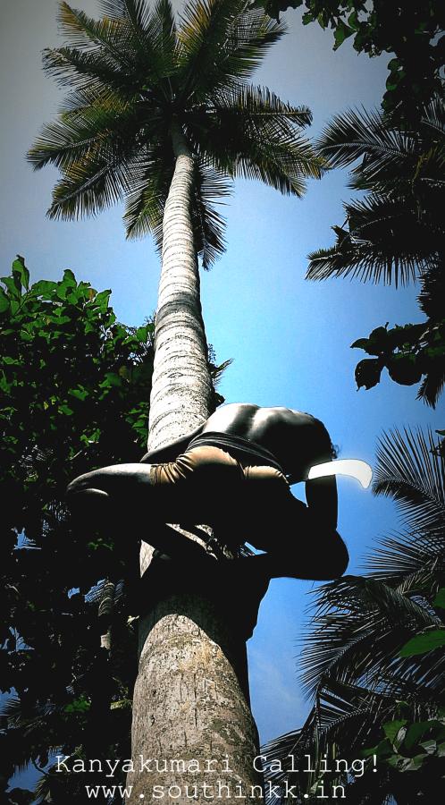www.southinkk.in - Coconut Tree Climbers of Kanyakumari