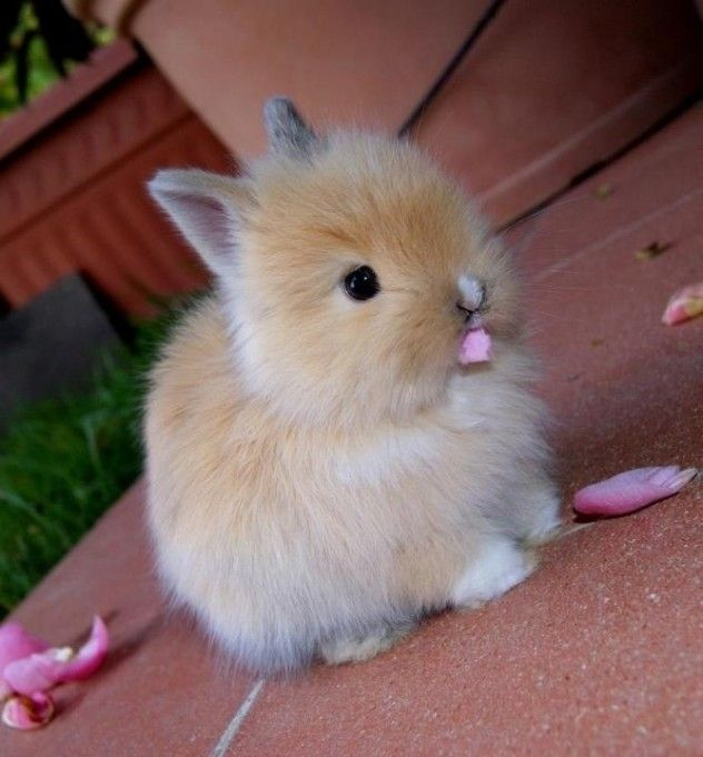 this cute fluffy bunny eating something is this bunnies food or not