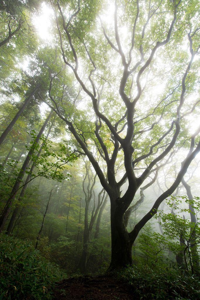 Hula dancer of forest (Japan) by SYU*2 Japan landscape