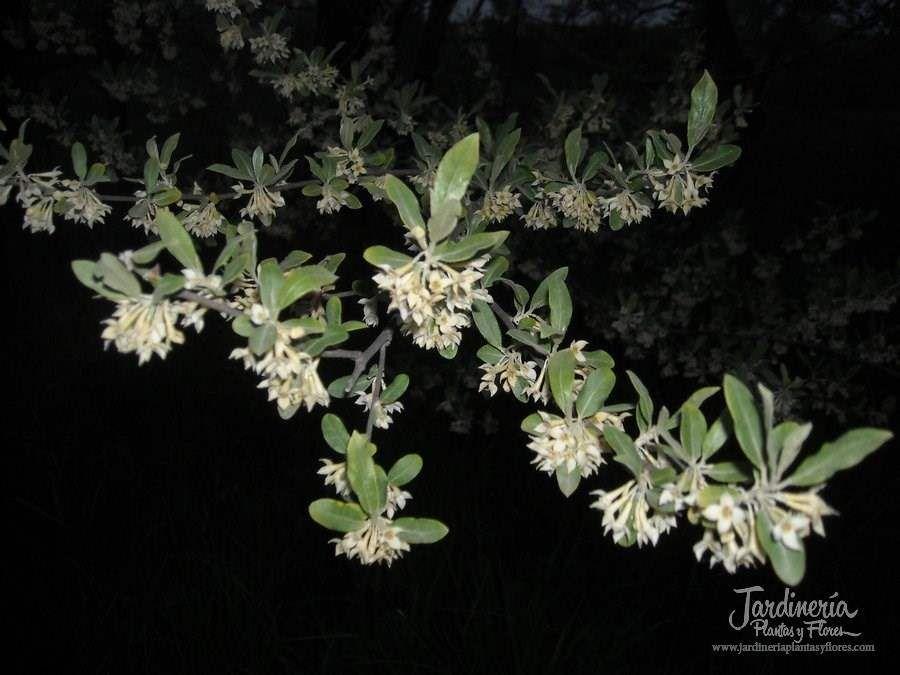 Dulces sueños - http://jardineriaplantasyflores.com/fotos/dulces-suenos/