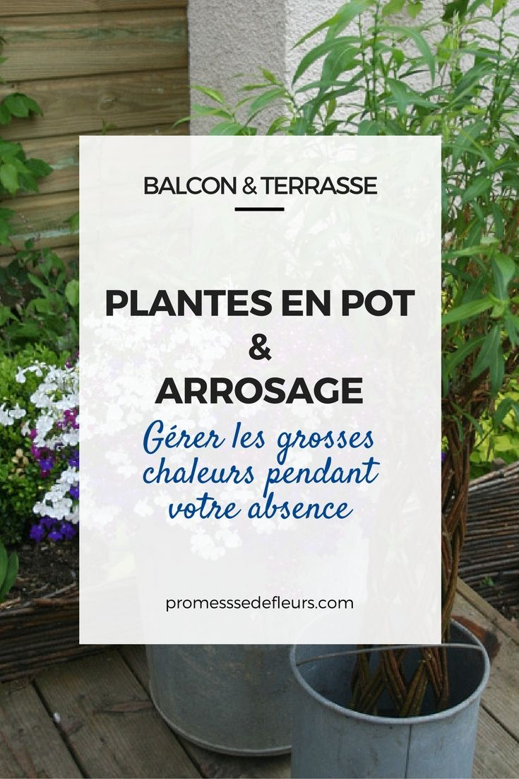 plantes en pot et arrosage : gérer les grosses chaleurs pendant