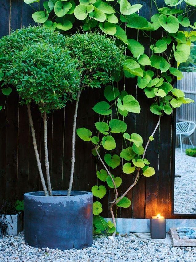 Havedesignerens grønne ommøblering | Bobedre.dk