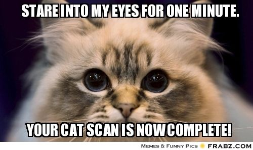 ff9237a101df22daf0d1c634c889d43f cat scan funny memes pinterest funny memes and meme