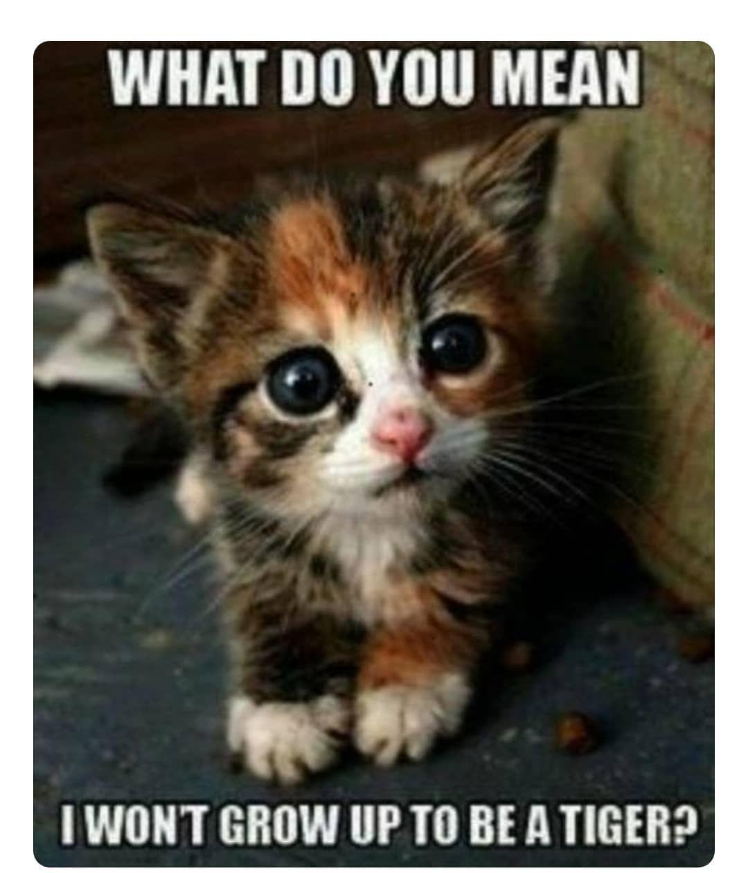 Sooooooooooooo Cute Cute Animals Funny Animal Pictures Cute