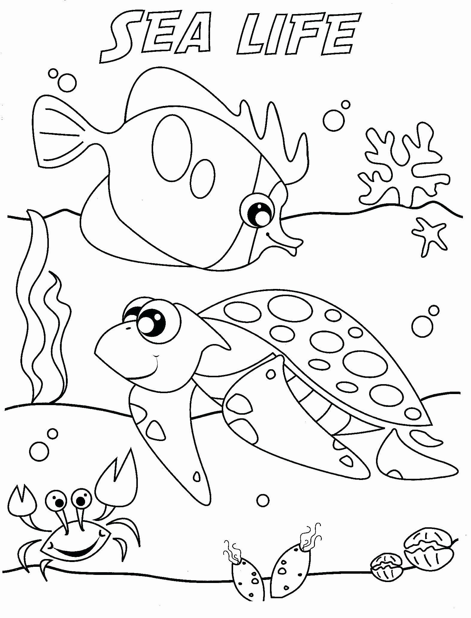 Water Animal Coloring Pages Fresh Marine Science Coloring Sheets