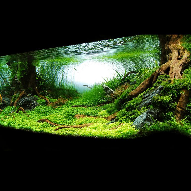 Freshwater Aquascape: Freshwater Aquascape