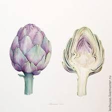 Znalezione Obrazy Dla Zapytania Liscie Debu Botanical Drawings Botanical Painting Botanical Illustration
