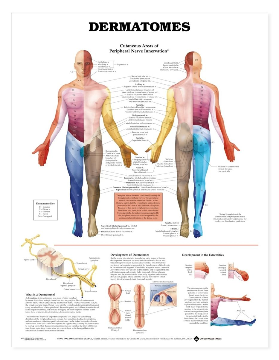 Study Chart For Cranial And Peripheral Nerves Google Search