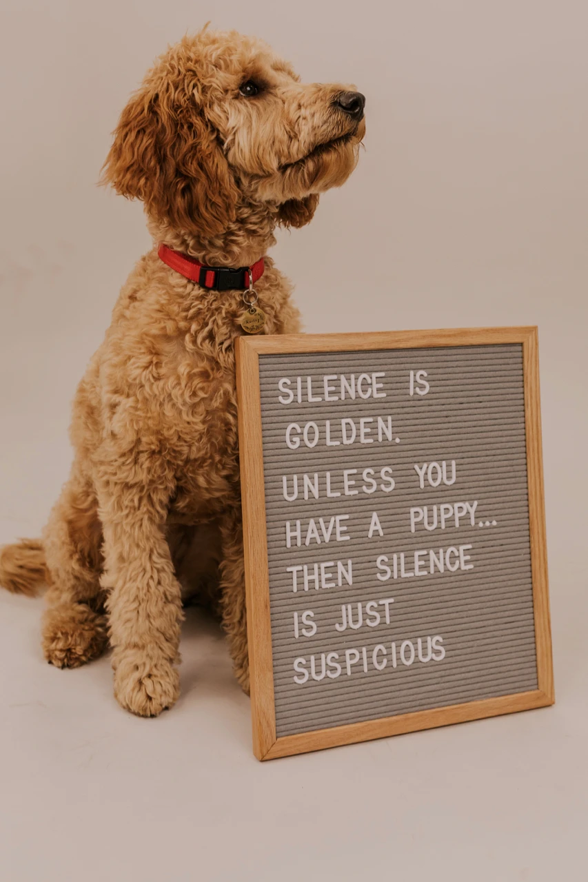 Rettel Board Chit Chat In 2021 Puppy Quotes Puppy Announcement Puppy Decor