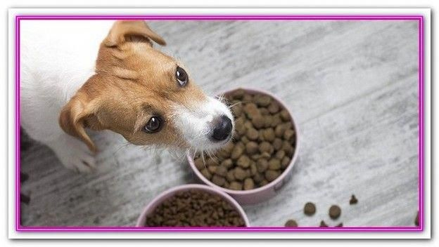 Best All Natural Dog Food Brands Read Reviews And Buy The Best