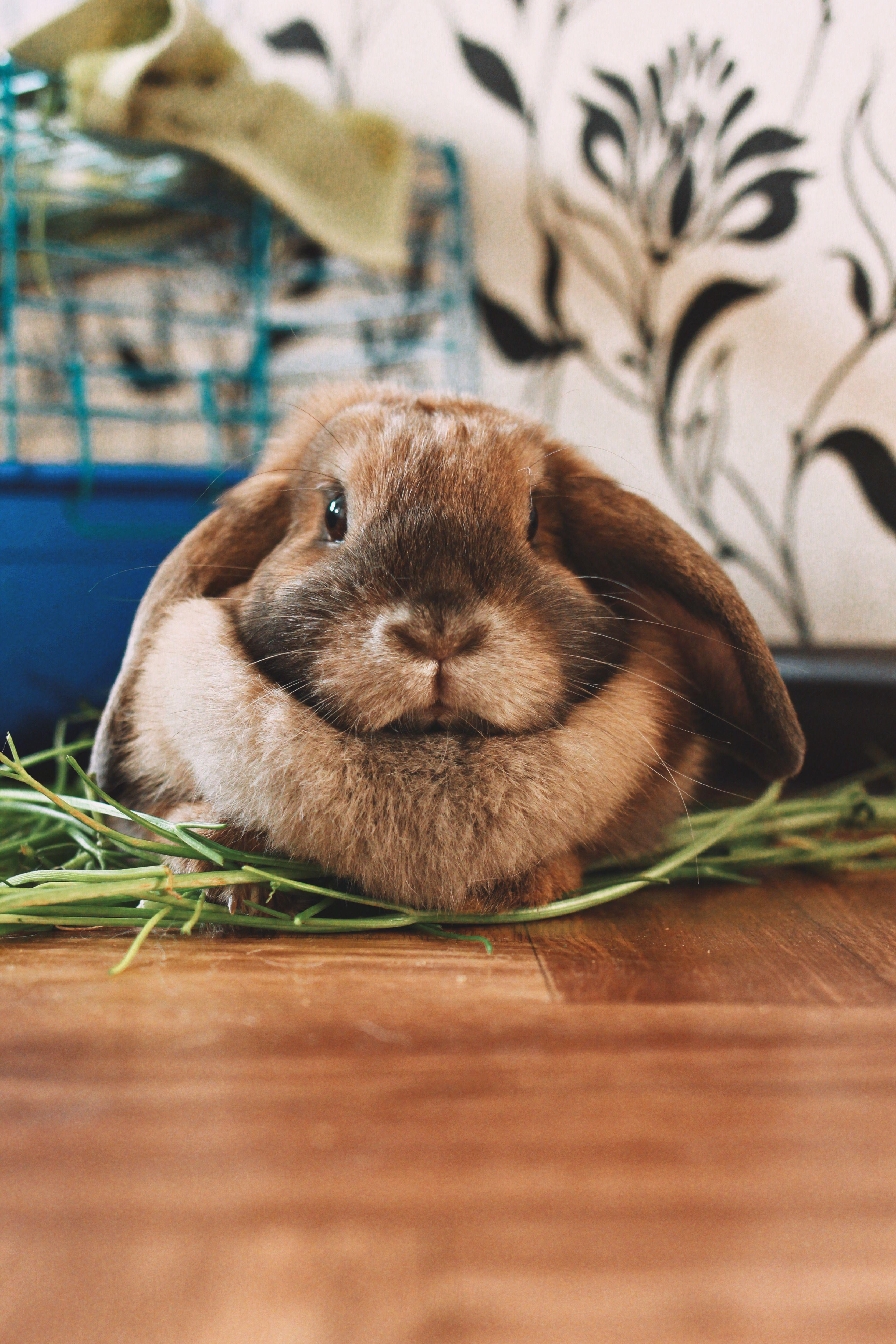 Pin By Adam Burt On Rabbits Animals Rabbit