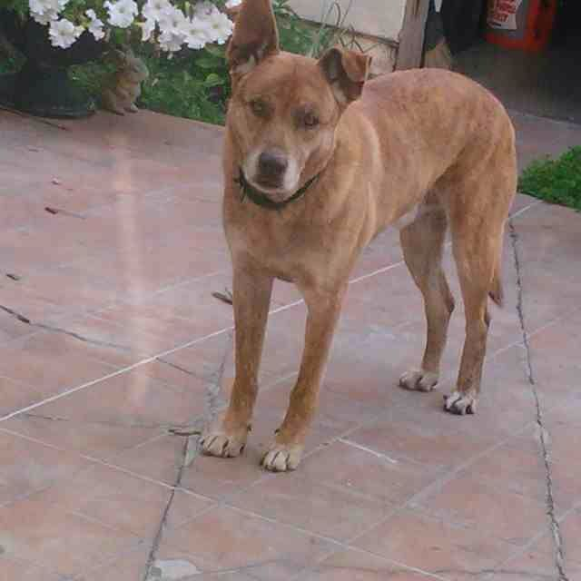 Reunited After 6 Days His Owners Saw The Finder S Post On Craigslist With Images Losing A Dog Brown Dog Find Pets