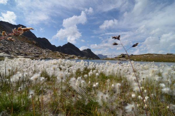 Natura - I laghi Gemelli - Lî laou Bêsoun Prali Praly