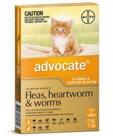 Advocate Cat 4kg Orange 3 S Fleas Cat Fleas Cats
