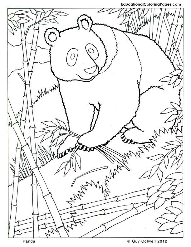 panda coloring, zoo animals coloring, cute, free