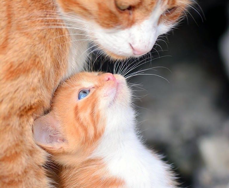 Https Ift Tt 2ppxkif One Cat Just Leads To Another Cute Cats