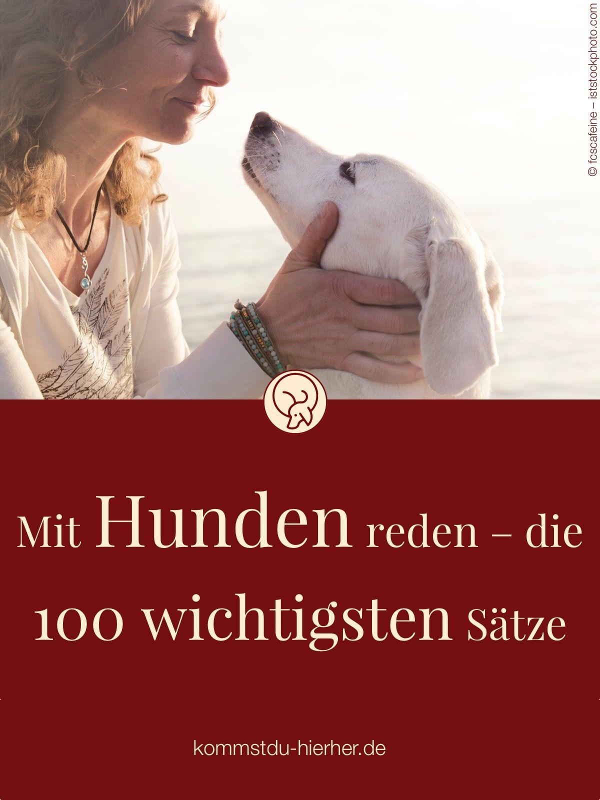 Mit Hunden Reden Die 100 Wichtigsten Satze Hunde Verstehen Hunde Hundeverhalten
