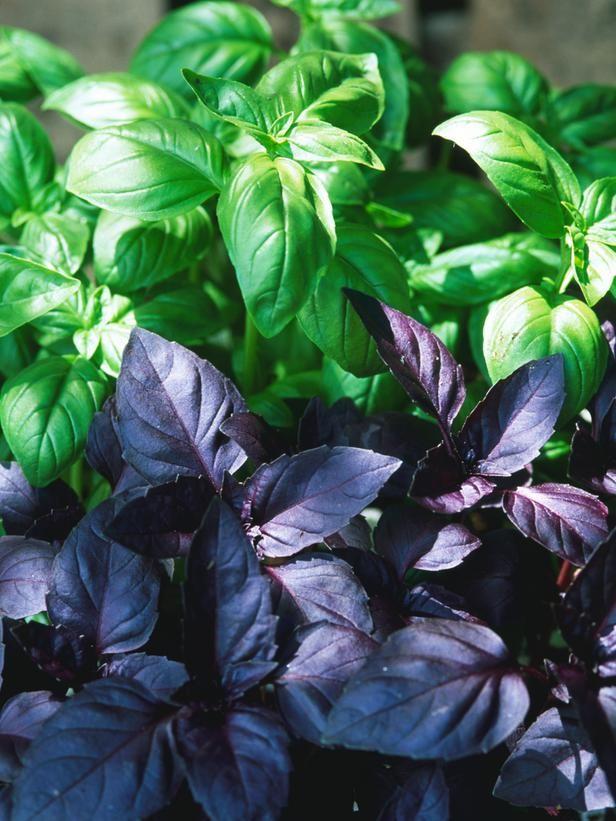 Grow Your Own Kitchen Countertop Herb Garden Best Herbs 400 x 300