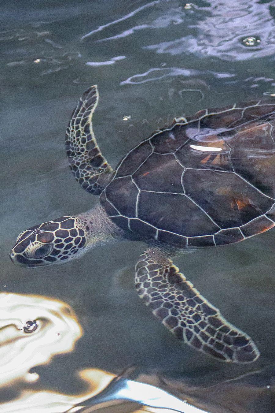 The Texas State Aquarium's Wildlife Rescue Center recently