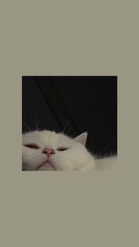 Wallpaper Iphone Animal Wallpaper Cat Wallpaper Wallpaper Images Hd