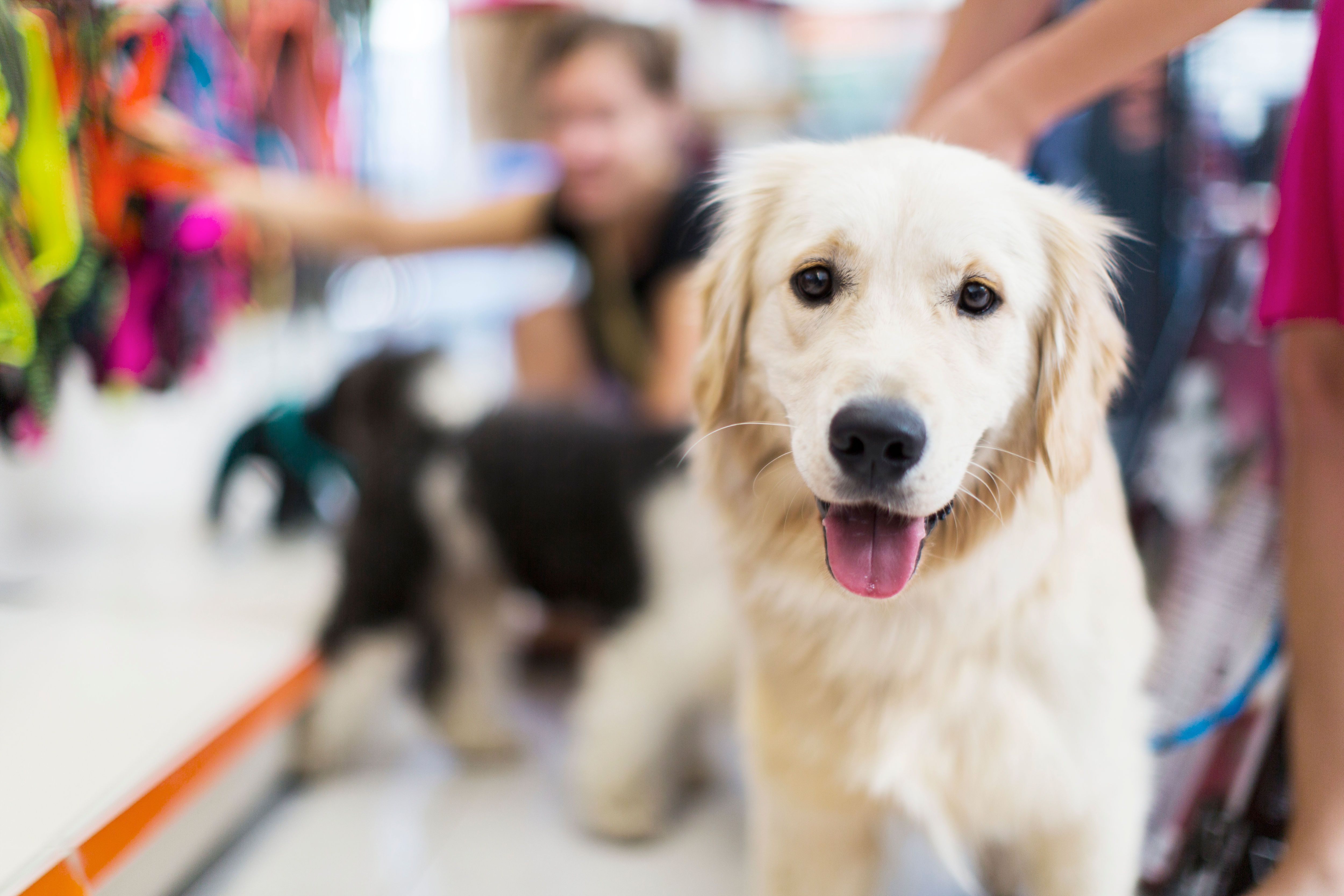 5 Tips for Choosing a Rescue Dog Animals, Pets, Pet store