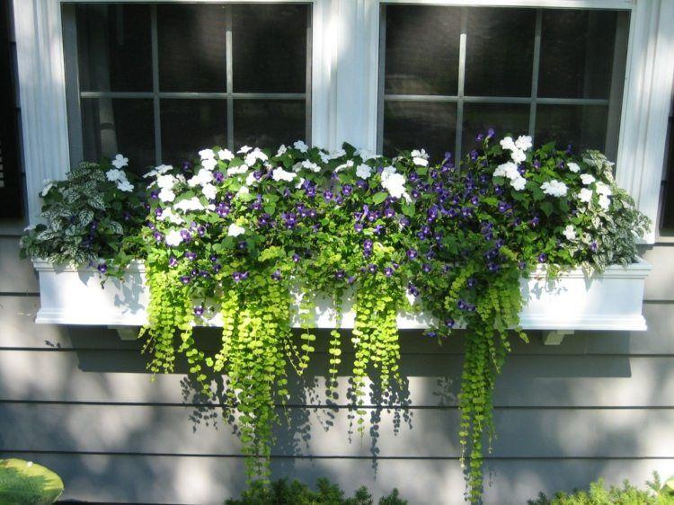 Berühmt Ein interessanter Blumen Mix aus hängenden Pflanzen und Veilchen @FQ_36