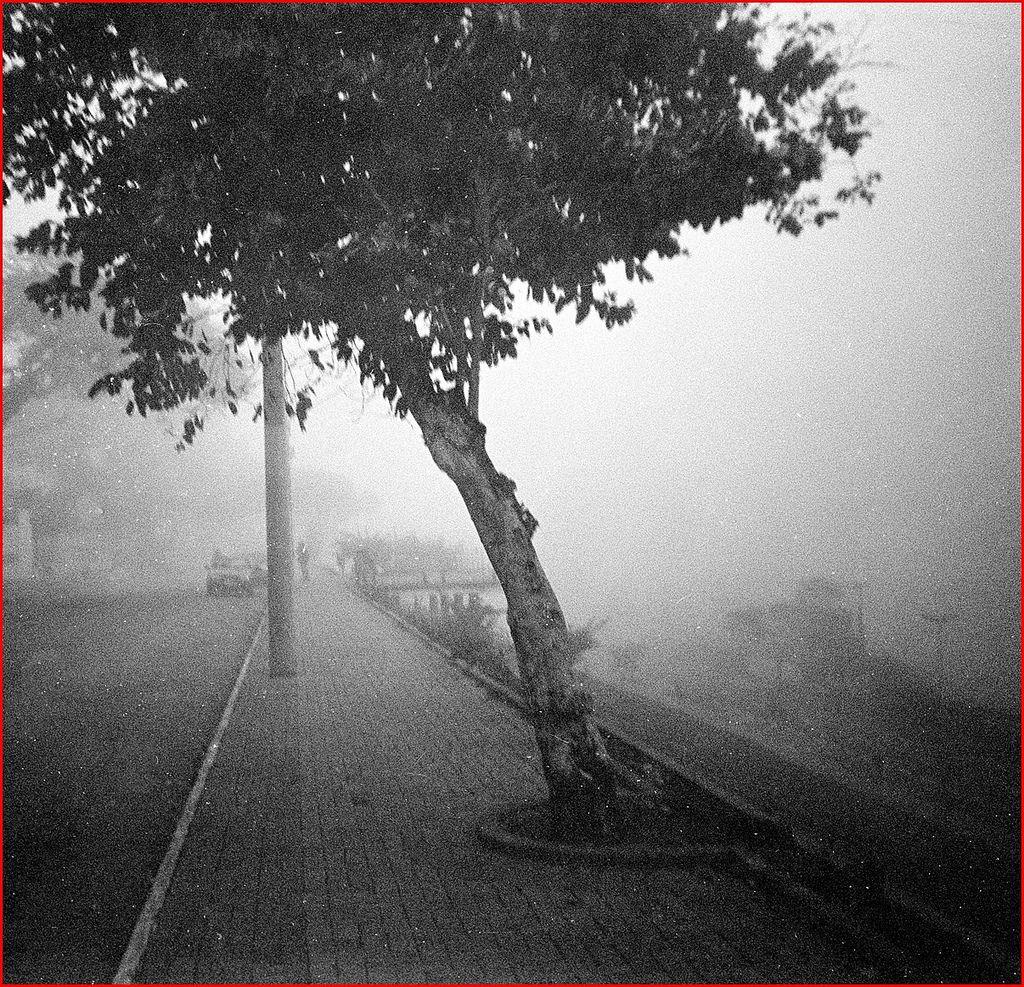 Mirante:  Neblina