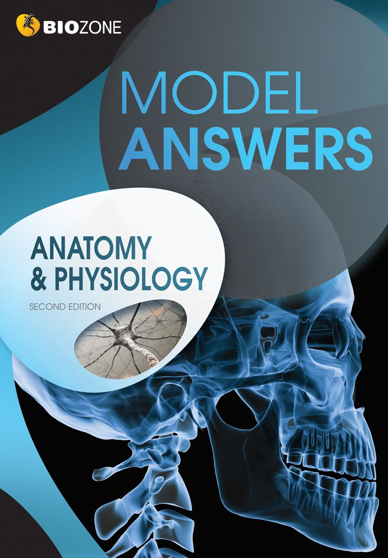 BIOZONE\'s Anatomy & Physiology Model Answers. | A&P | Pinterest ...