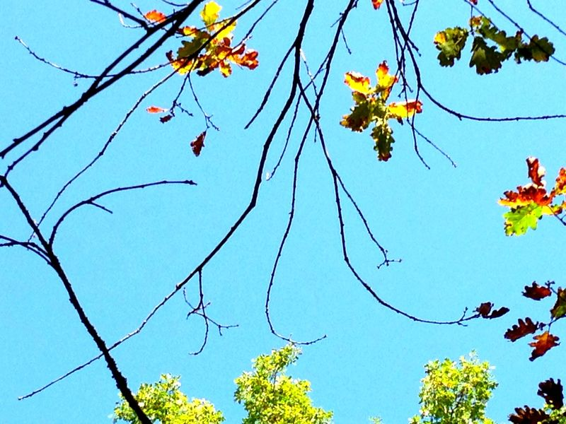 Herbst meets Sommersonne