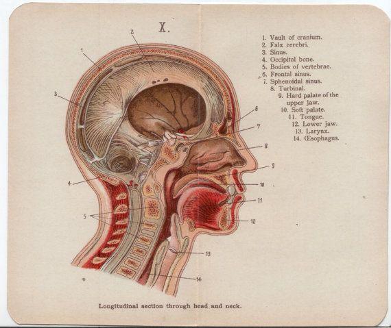 SALE 3 x Vintage Anatomy Plates: Head Eye and by WorldofRareBooks ...