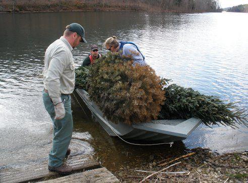 Christmas Trees Recycled Into Fish Habitats Across The Country Recycled Christmas Tree Habitats Habitats Projects