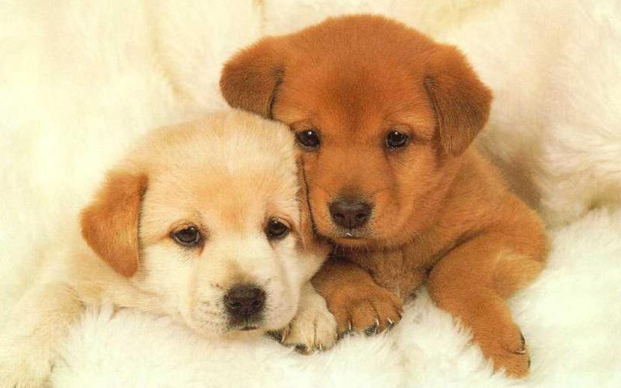 Puppies Wallpaper Animal Backgrounds Cute Dog Pictures Cute Puppy Pictures Baby Dogs