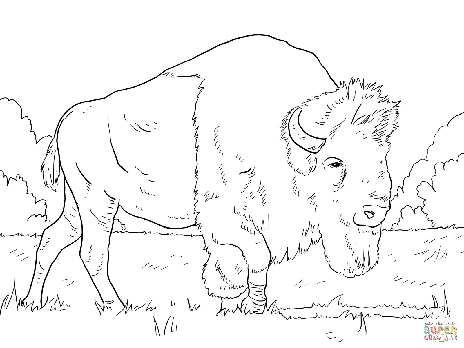 Bison Grazing on Grasses Coloring page | Free Printable Coloring ...