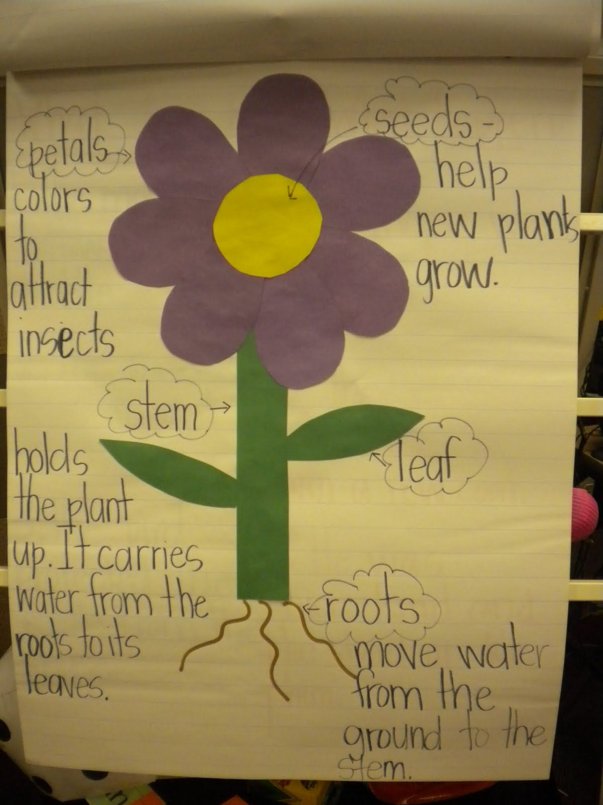 Adventures Of First Grade Parts Of A Flower