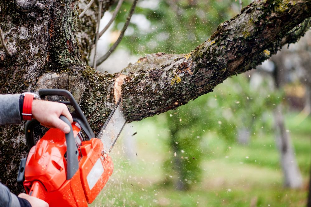 Dave lund tree service and forestry co ltd offers wide