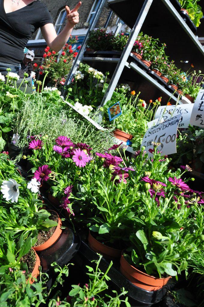 Dsc 0023 Columbia Road Flower Market London Flower Market Columbia Road Flower Market Flowers
