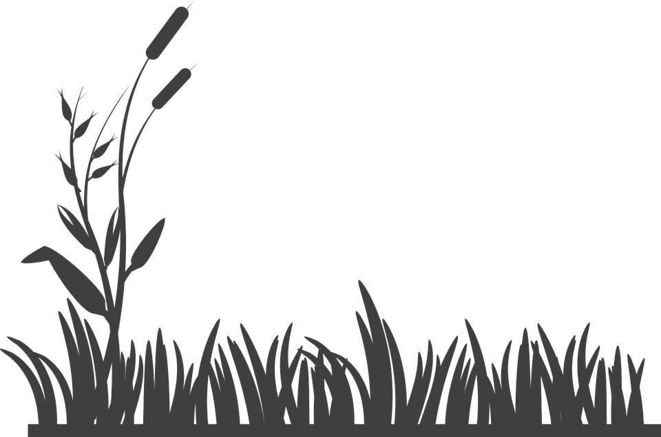 Grass silhouette. Free image on pixabay
