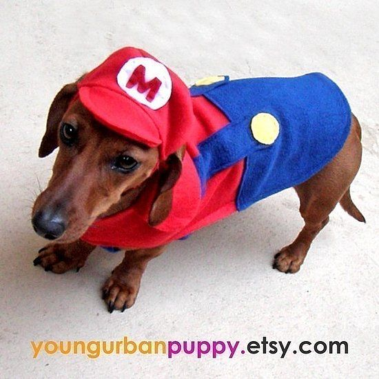 Super Mario dog costume & Mario and Hat | Costumes Dog and Dachshunds