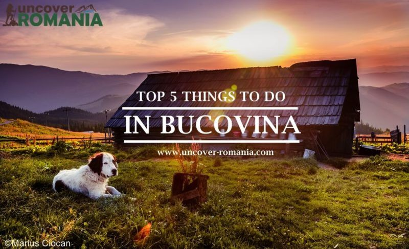 Top Five Attractions and Things to Do in Bucovina