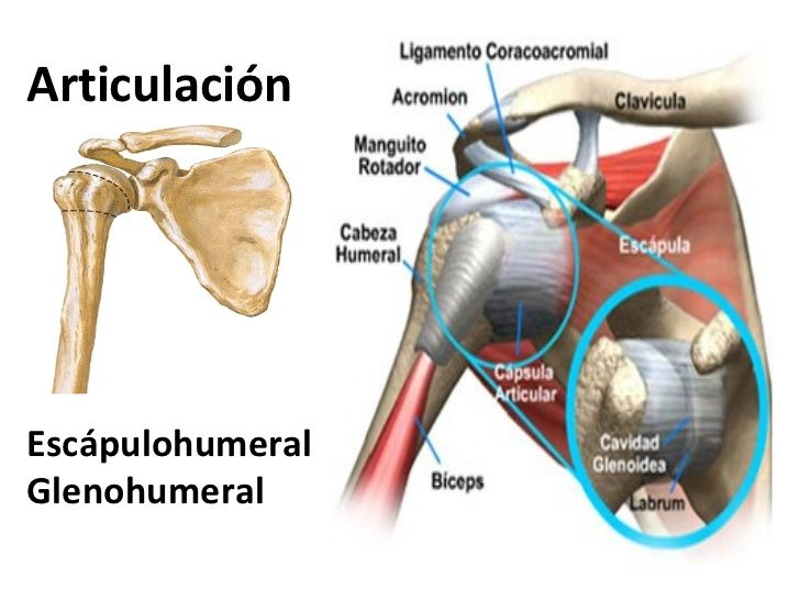 Famoso Anatomía Mri De Articulación Del Hombro Bosquejo - Anatomía ...