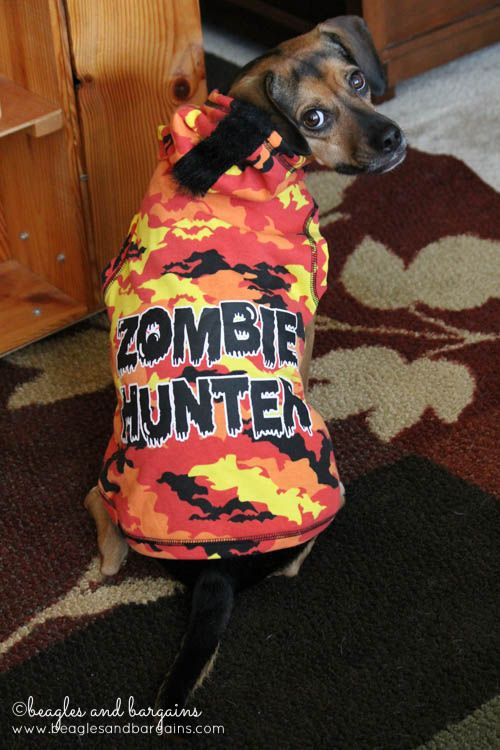 Luna Models Costumes From Petco S Halloween Bootique Halloween Bootique Petco Cute Dog Photos
